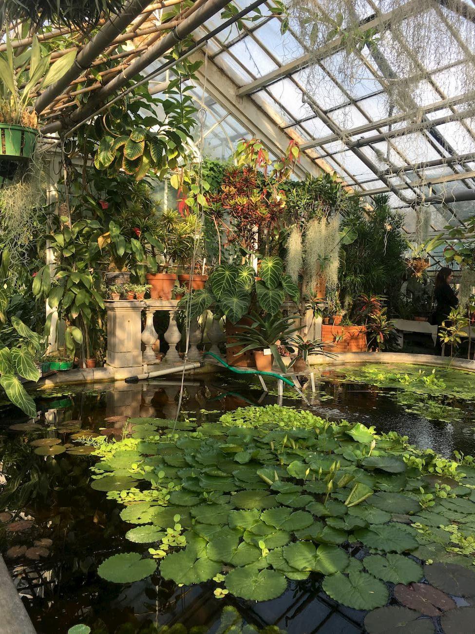 szklarnia z orchideami ogród botaniczny kraków