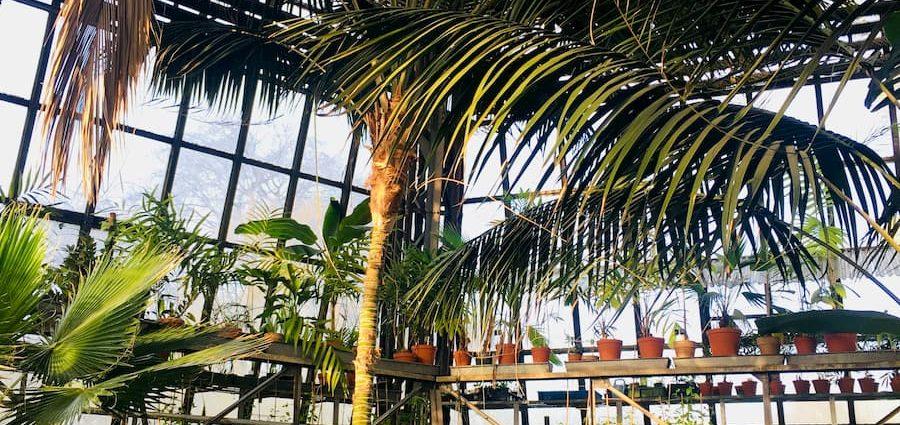 wysoka szklarnia na palmy w ogrodzie botanicznym w krakowie