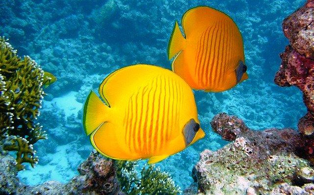 rafa koralowa egipt